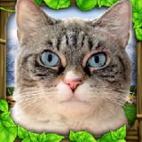 流浪猫咪求生安卓版 v1.0