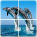 海洋拼图安卓版 v1.7.5