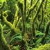 贝贝丛林冒险安卓版 v1.0